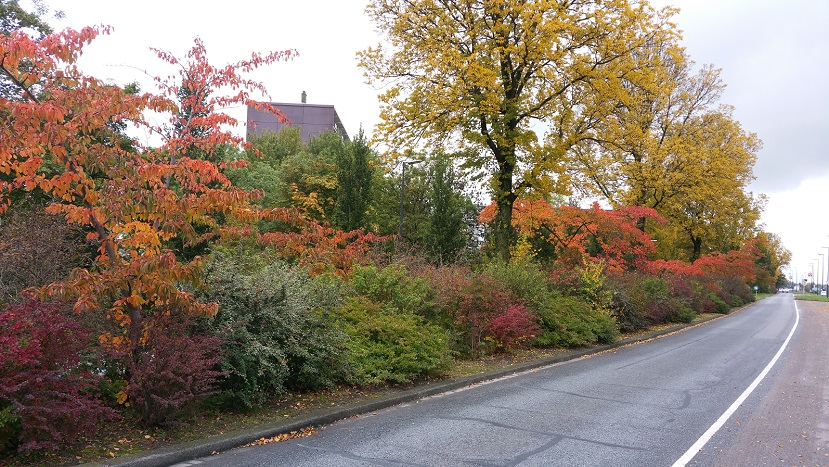 Herfst Westandseweg2