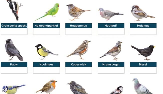 © tuinvogeltelling.nl