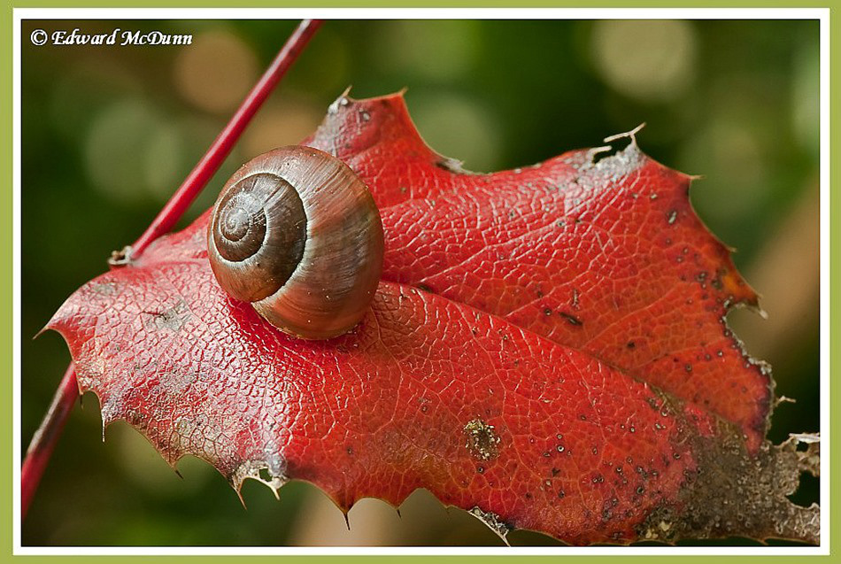 slak-op-rood_thumb